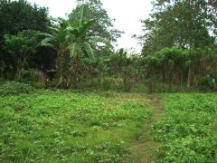 Indangan 3,000sqm. Vacant Lot, Davao City (near Rancho Palos Verdes Subdivision and Golf Course / CLEAN TITLE) For Sale